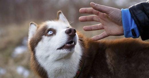 Cover Estudio confirma que los perros saben quien es buena y mala persona