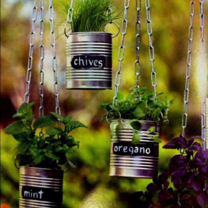 plantas colgadas en latas