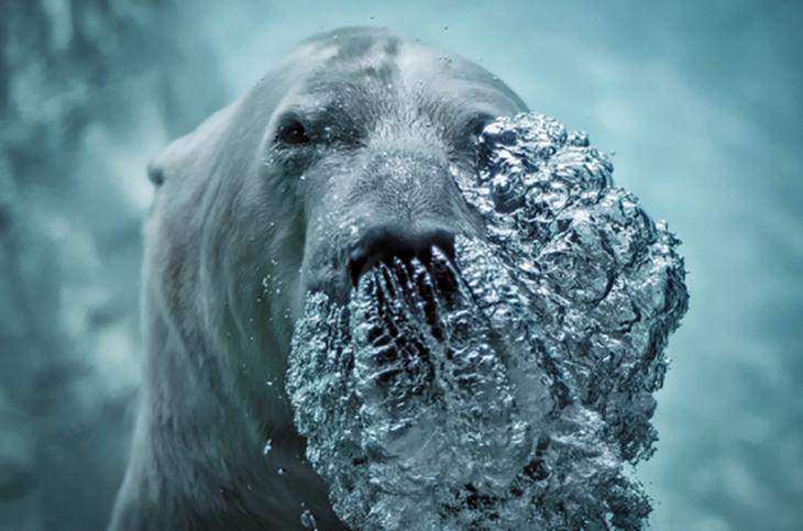 Oso polar exhalando bajo el agua