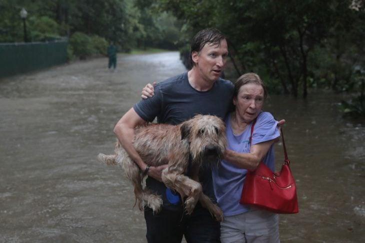 salvan a perrito