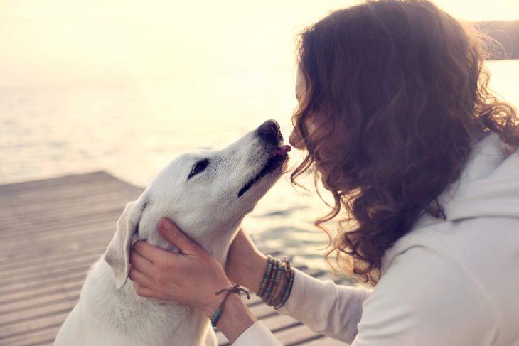 perros saben cuando alguien es bueno