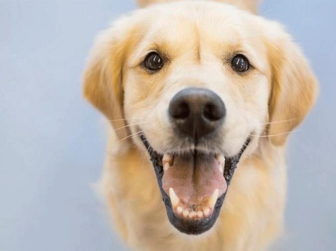 perros saben cuando alguien es bueno o malo