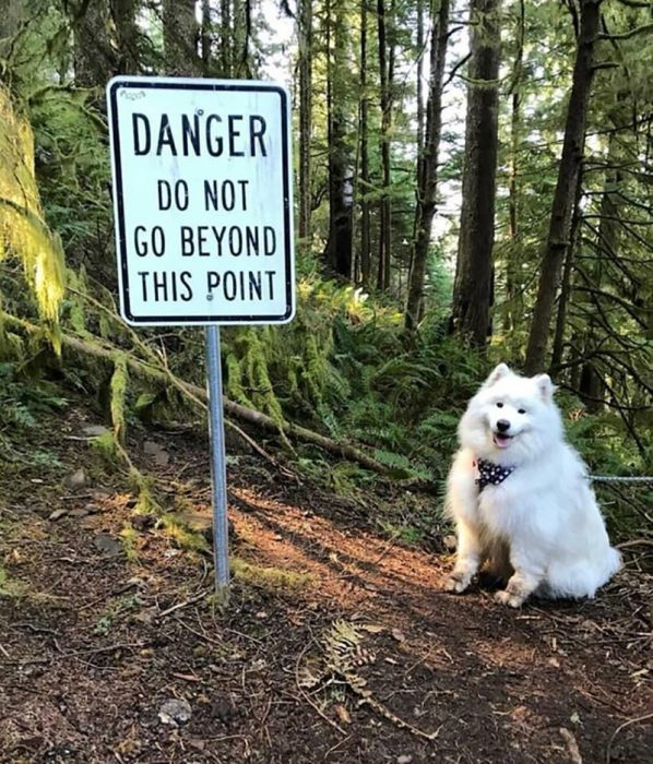 perrito en el bosque