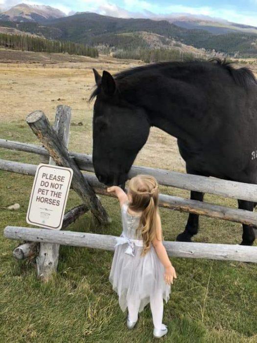 niña dando de comer a un caballo