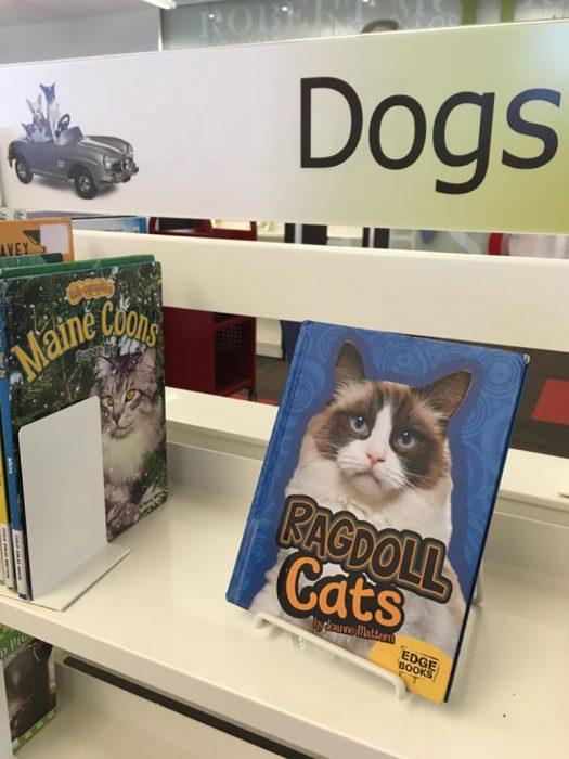 gato en lugar de perro