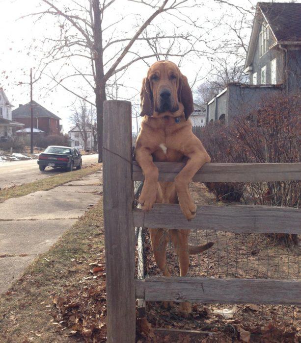 perrito vecino