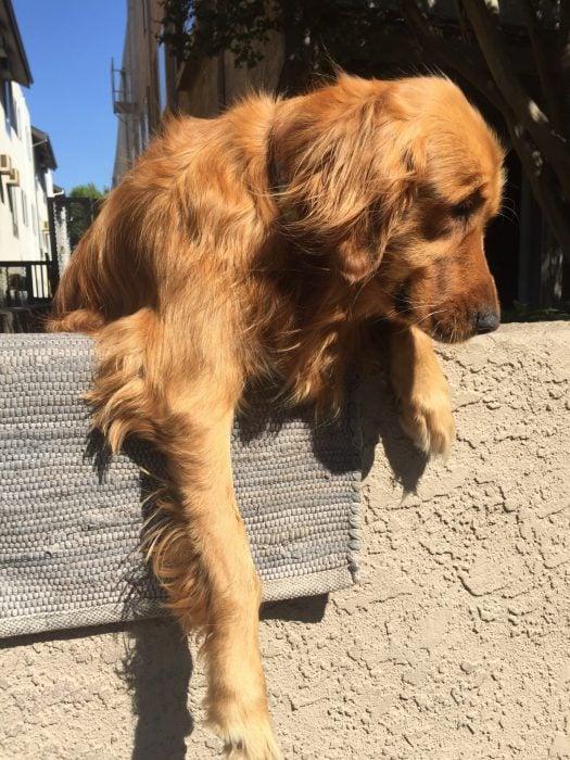 Riley perro esperando