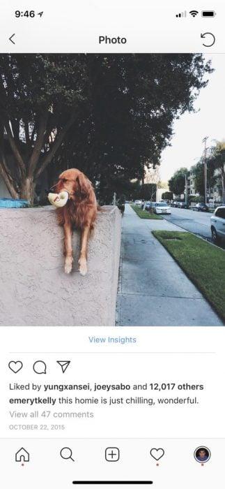 Riley perro juguete