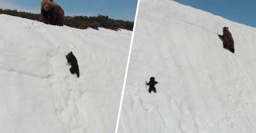 Cover Oso bebé cautiva a redes al 'luchar' en contra de la nieve