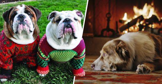 Cover Cómo cuidar a tu mascota durante el frío