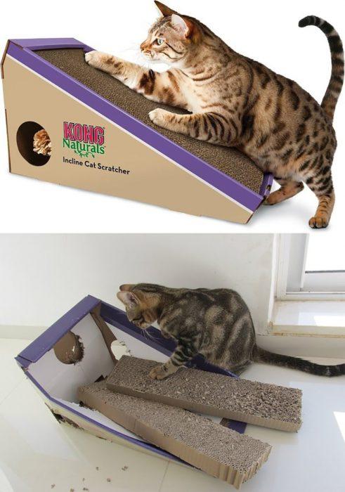gato y rascador