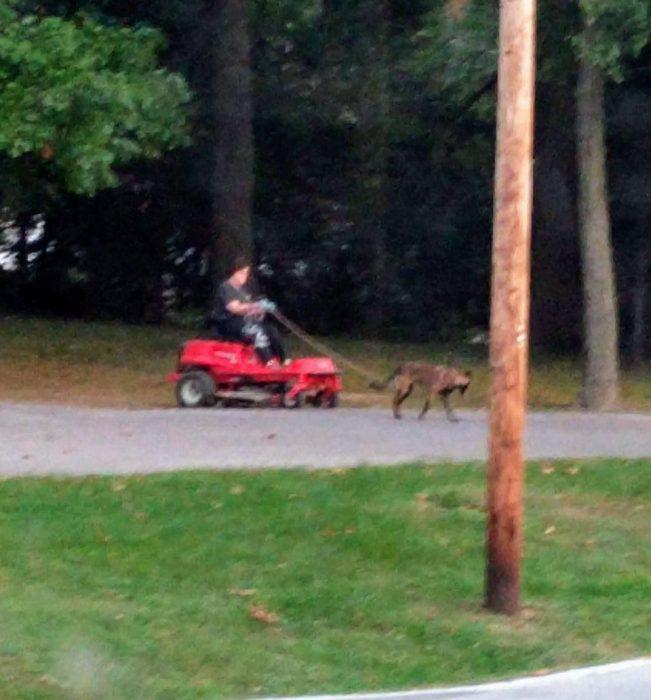 paseando al perro en coche