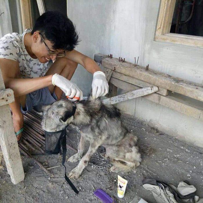 cortando el pelo a un perrito
