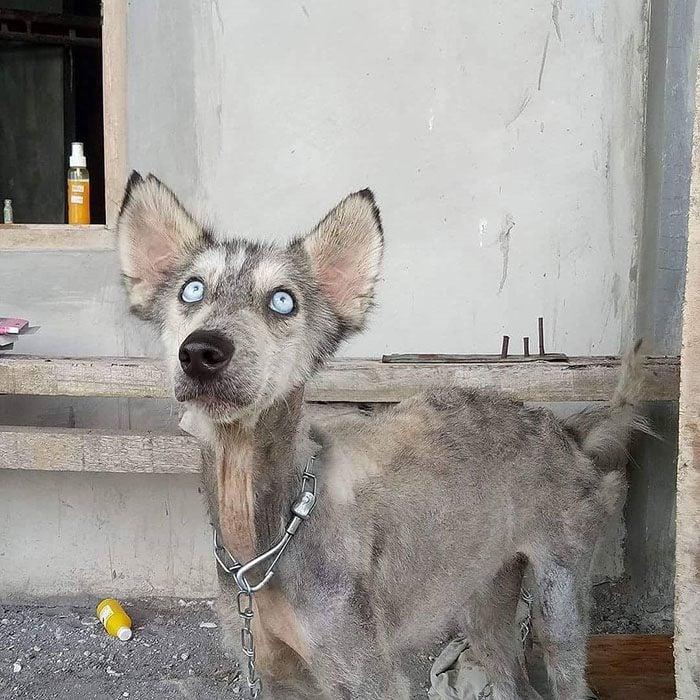 perrita de ojos azules