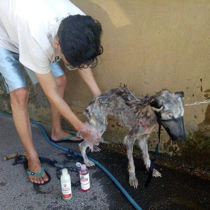 hombre bañando perrito