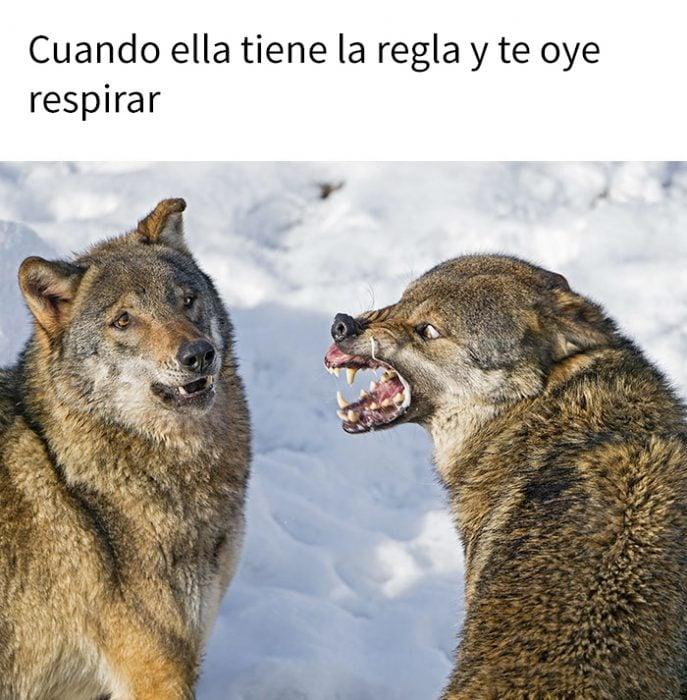 meme lobos