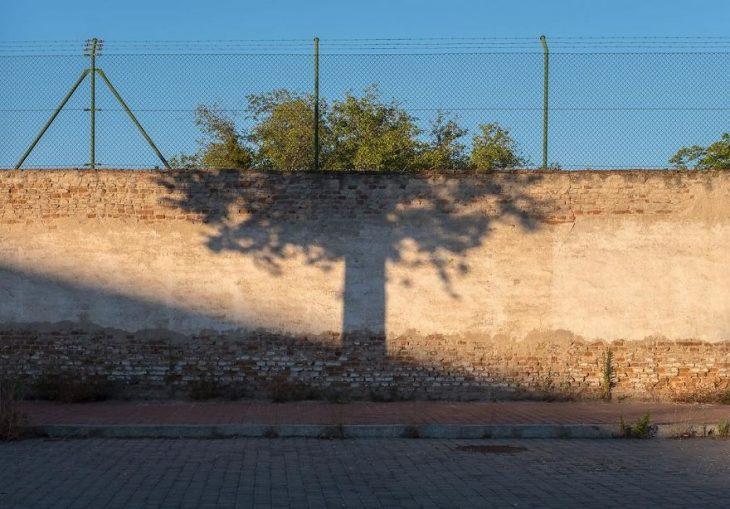 sombra y árbol