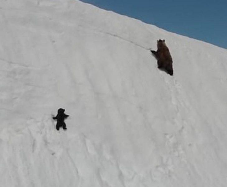 osito tratando de subir una montaña