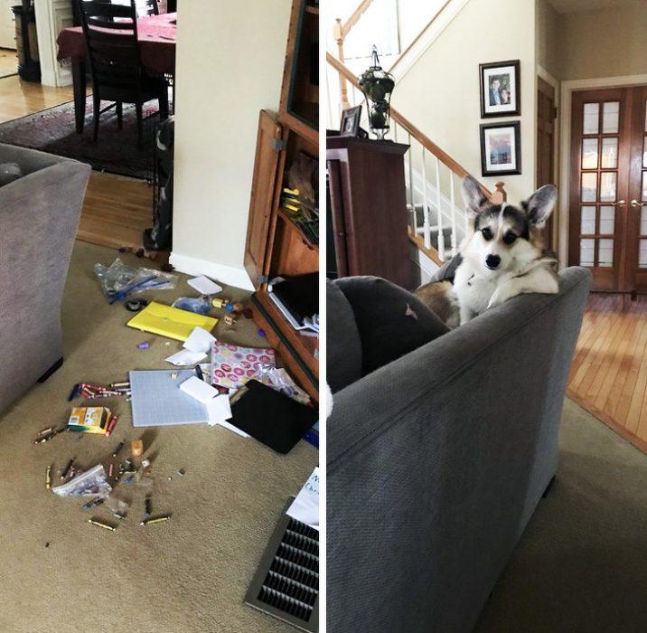 perrito desordenado