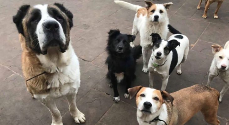 muchos perritos
