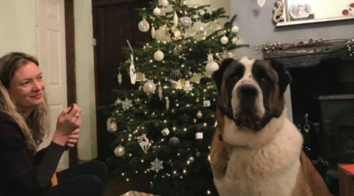 perrito árbol de navidad
