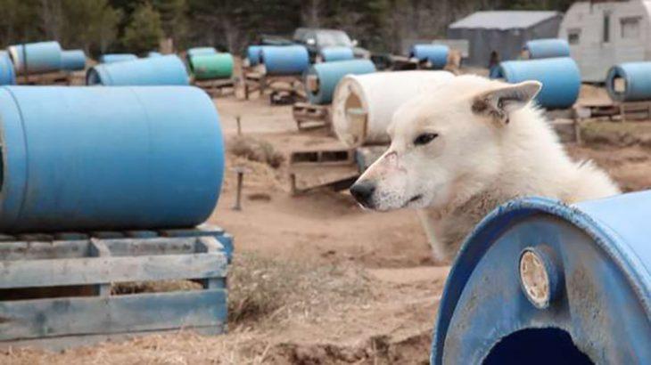 perrito que se ve triste frente a un tanque azul