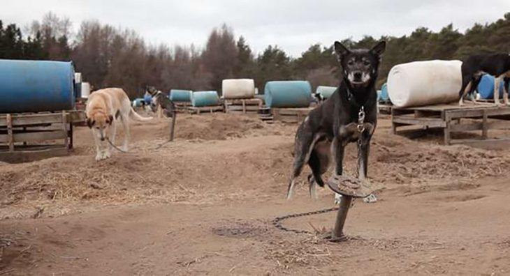 perrito en un lugar de perros de trineo