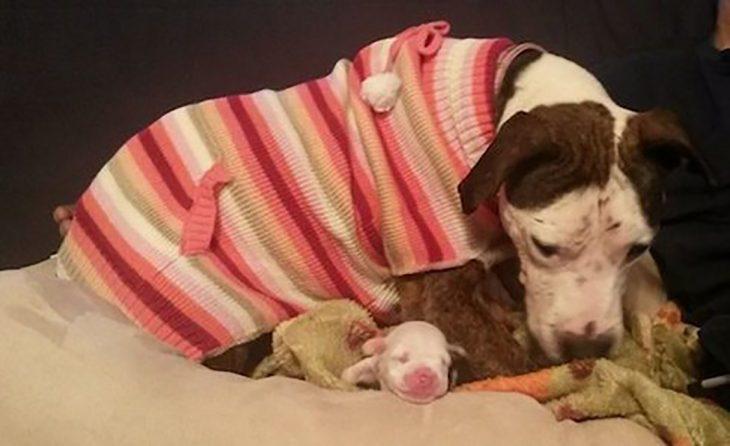 perrita con suéter y su cachorro