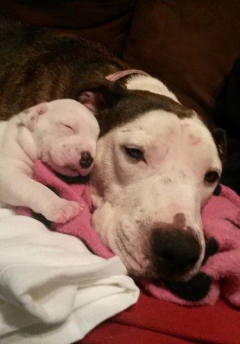 mamá perrita con su cachorrita