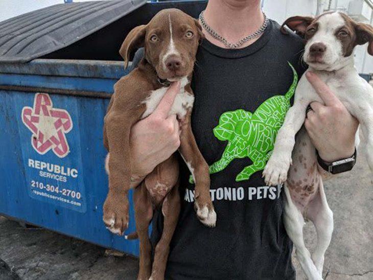 cargando dos perritos