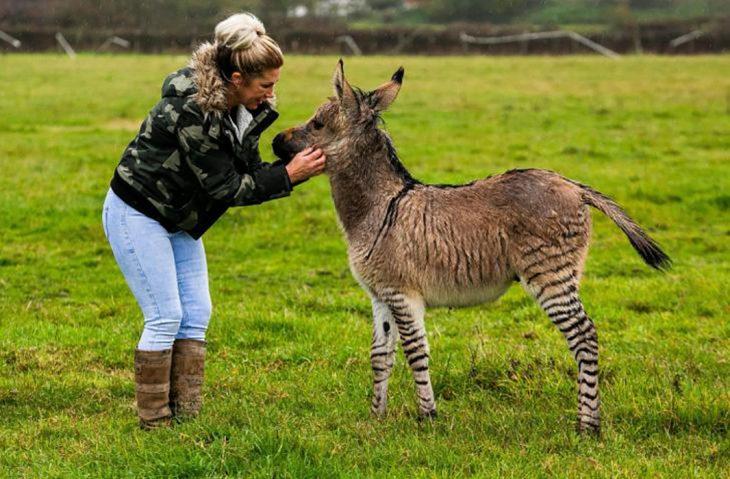 señora y burro zebra