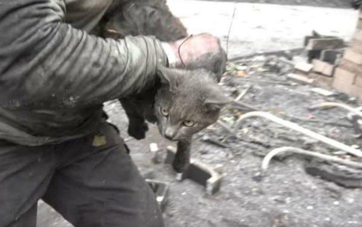cargando a gatita