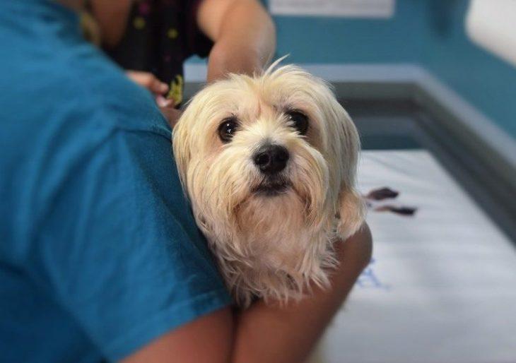 perro en veterinaria