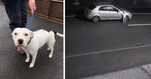 Cover Perrito desesperado corre detrás del coche que lo abandonó