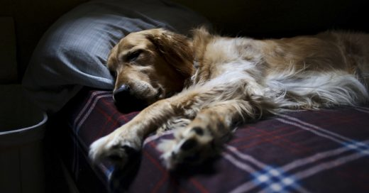 Cover Un veterinario revela qué es lo que sienten los perros antes de partir…