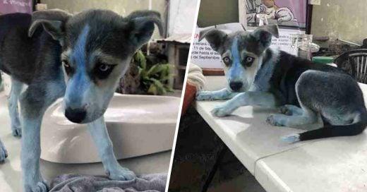 Cover Cachorra azul deja desconcertados a todos en veterinaria