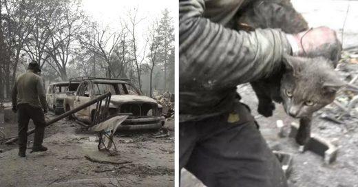 Cover Rescatan a gata de devastador incendio en California