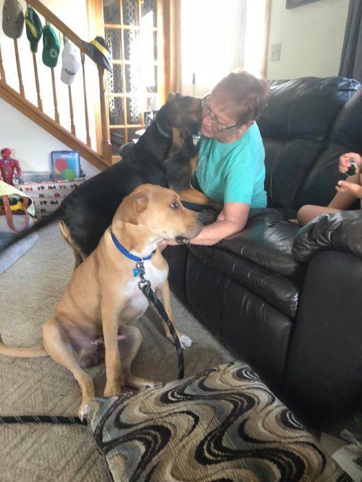 señroa y dos perros