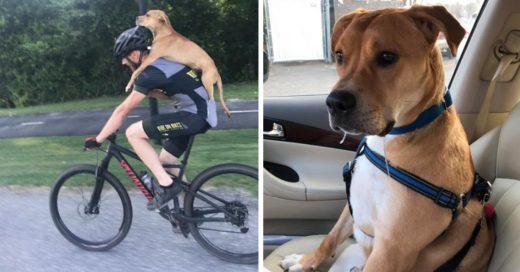 Cover Ciclista rescató a un perro atropellado abandonado en el bosque