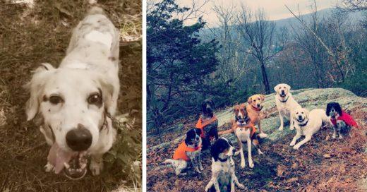 Cover Heróico perro viejo defiende a su familia de un oso y muere