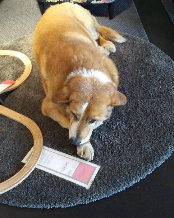 perrito en alfombra