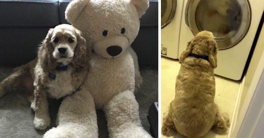 Cover Preocupado perrito espera a que peluche favorito salga de la secadora