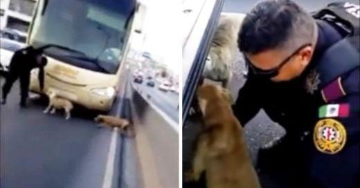 Cover Policía rescata a 2 perros de ser atropellados en medio de una autopista