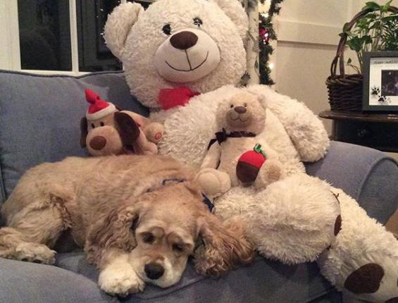 perrito y oso de peluche mejores amigos