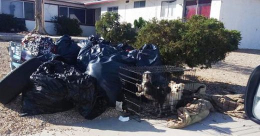 Cover Perros enjaulados fueron abandonados con la basura después de que su familia se mudó