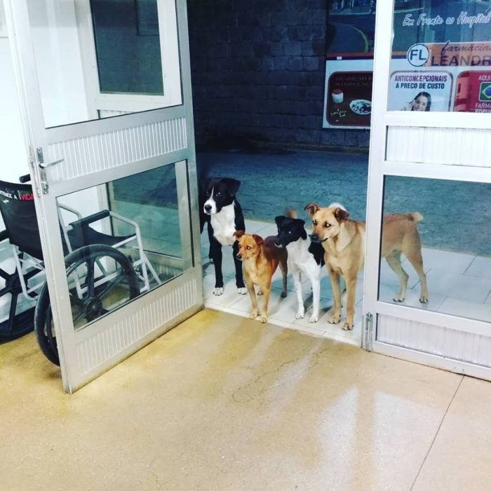 perritos fuera del hospital