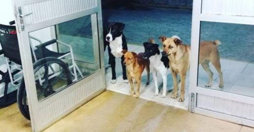 Cover perros de un hombre sin hogar esperan a que su dueño salga del hospital