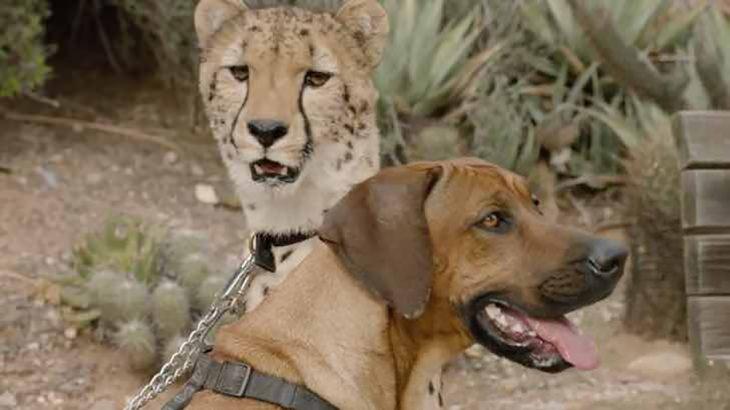 perro adulto y guepardo