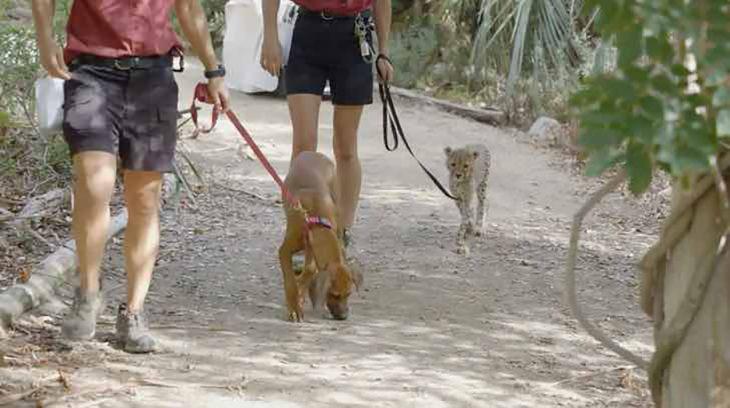 perro y guepardo amigos