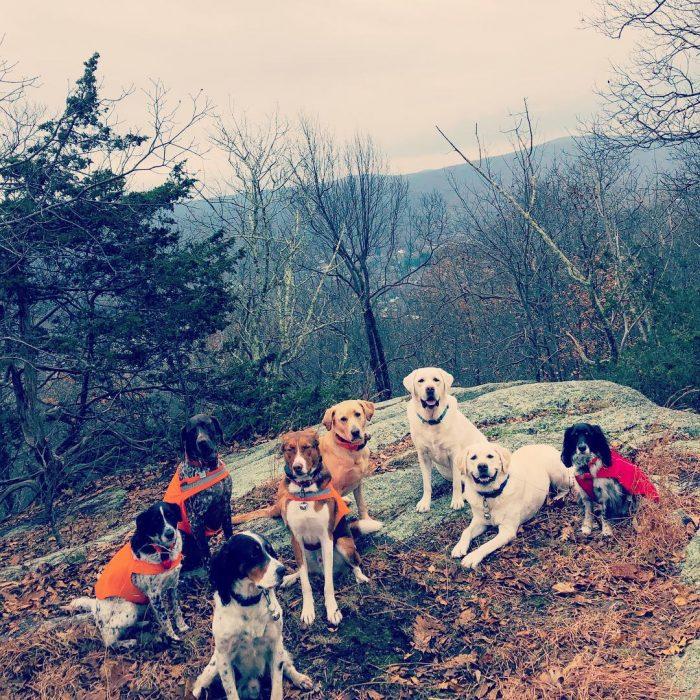 7 perros en duelo